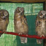 Eastern Sierra Wildlife Care