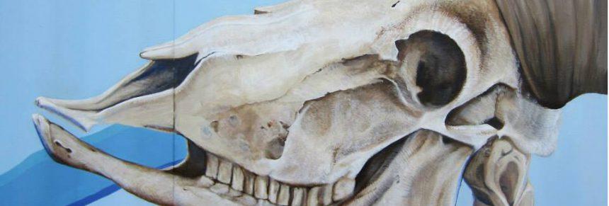 Bighorn Sheep Migration Murals