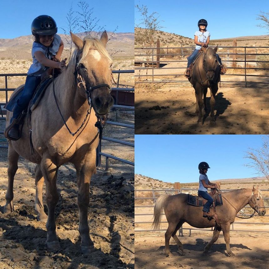 Freedom in Motion Therapeutic Riding Center